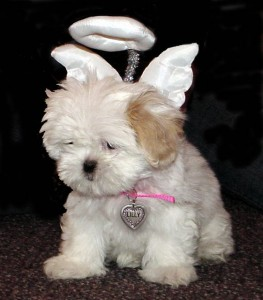 2003-Lilly-the-Angel-Puppy-263x300